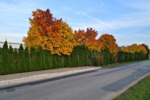Fotosoutěž - podzim v Otmarově